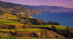 Naramata Bench Wine Tour in BC's Okanagan Valley Prize Homes, Adventure Tours, Canada Travel, Wine Country, Monument Valley, Explore, Outdoor, Bench, Spaces