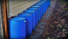 Se tiver uma chance de capturar água da chuva e reutilizar água da máquina de lavar, faça!