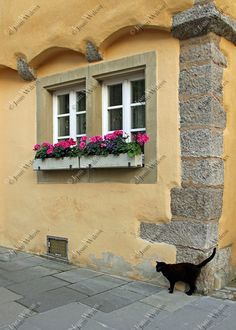 Black Cat & Floral Window Boxes Scene Rothenburg by JWPhoto