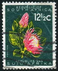 South Africa 1961 First Republick SG 207 Fine Used SG 207 Scott 263 Condition Fine Used Only one post charge applied on multiple purchases Details N South African Flowers, South African Art, Protea Art, Protea Flower, Japanese Stamp, Stamp Dealers, Postage Stamp Art, Stamp Printing, Vintage Stamps