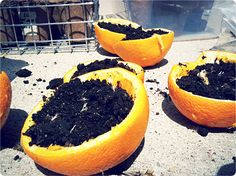 Use orange rinds for seed starters. Plant right in the ground. from hipsterhousewife.com