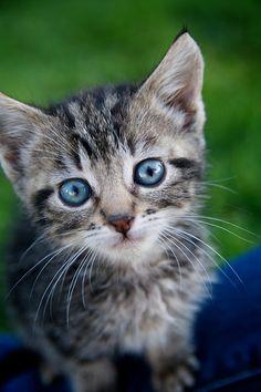 kitten #photography