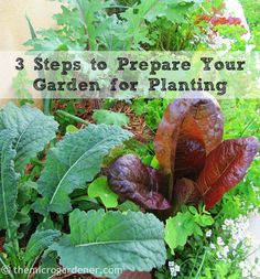 "Are your plants THRIVING or just SURVIVING? If your garden is not growing well, try these 3 simple steps to help. Just like WE thrive on a nutrient-dense diet in a stress-free environment, healthy plants need 'food' and a 'happy home' to live in too. If we meet the 'needs' of our plants, they will flourish, blossom and produce a bountiful harvest. Step 1: A SEASONAL HEALTH CHECK: Check your soil structure, pH, moisture, nutrients and organic matter. My philosophy is: ""Don't start planting…"