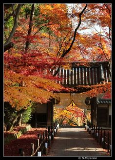 Way to gate, Nagaokakyo, Kyoto, Japan Copyright: Miyazaki Norihito