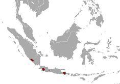 Indonesian mountain weasel - Wikipedia