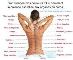 Si vous ressentez une douleur quelque part dans votre corps, c'est peut-être que vous avez un problème à votre colonne. Heureusement, voici un schéma pour vous aider à comprendre comment les organes sont reliés à la colonne vertébrale.  Découvrez l'astuce ici : http://www.comment-economiser.fr/vrai-causes-de-vos-douleurs-corps.html?utm_content=buffer57779&utm_medium=social&utm_source=pinterest.com&utm_campaign=buffer