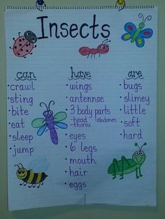 Insects anchor chart: