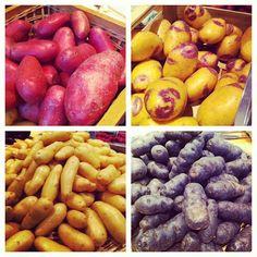 Pommes de terre, différentes variétés