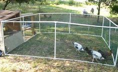 Building A DIY Chicken Coop If you've never had a flock of chickens and are considering it, then you might actually enjoy the process. It can be a lot of fun to raise chickens but good planning ahead of building your chicken coop w Portable Chicken Coop, Best Chicken Coop, Backyard Chicken Coops, Chicken Coop Plans, Building A Chicken Coop, Chickens Backyard, Backyard Farming, Types Of Chickens, Keeping Chickens