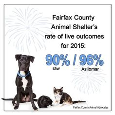#shelterpetadvocateFor the first time in the Fairfax County... fairfax fairfax city fairfax county fairfax va fairfax virginia  #shelterpetadvocate  For the first time in the Fairfax County Animal Shelters history it has sustained a 90% rate of live outcomes (using raw data) for the entire year!!! As the shelter continues to develop and expand programs consistent with the No Kill Equation (foster care TNR medical and behavioral rehabilitation etc.) its capacity for saving lives will further…