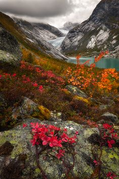Fall colors near a glacier in western Norway on a September day