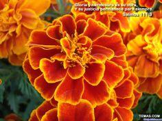 Imagen con colores impactantes y un mensaje cristiano hermoso, la belleza de la naturaleza de las flores!
