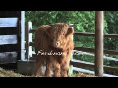Chris Benziger talks about Scottish Highlanders and their role in the Benziger Family Winery ecosystem.