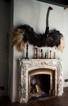 Taxidermy Ostrich, one of the wildest but coolest things I've seen in a home.
