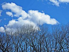Trees and Clouds by S Loft