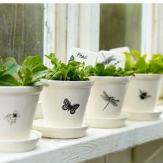 cute Botanical Plant Pots for herbs from Pale Interesting~ Painted Plant Pots, Painted Flower Pots, Small Indoor Plants, Potted Plants, Herb Garden, Garden Pots, Vegetable Garden, Garden Ideas, Peperomia Plant