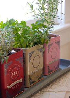 recycle tea tins for DIY herb garden Herb Garden Pallet, Container Herb Garden, Diy Herb Garden, Herb Planters, Garden Ideas, Earth Day Projects, Diy Projects, Harney And Sons Tea, Tea Tins