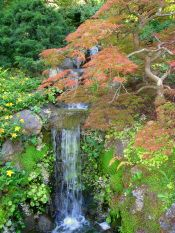 Hakone_Gardens,_Saratoga,_CA_-_IMG_9196