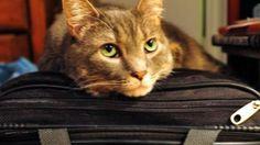 Come fare le valigie per cani, gatti e altri animali