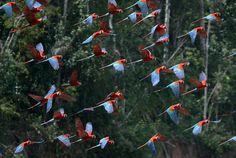 Amazon Peru by peruoropendola, via Flickr
