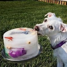 Perfect!! Freeze water and chicken stock with toys, carrots, treats, etc to keep dogs from getting bored and overheated in the backyard. by ...