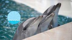 #Evpavideo Реклама Евпаторийского Дельфинария