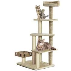 FurHaven Cat Furniture Play Stairs with Cat-IQ Busy Box- Cream This multi-level cat tree tower is great for your cat and kitten's need to climb and explore Natural sisal posts are the purr-fect scratching aids Multiple interactive toys and Cat-IQ Busy Box Kittens Playing, Cats And Kittens, Kitty Cats, Cat Tree House, Cream Cat, Cat Activity, Cat Perch, Busy Boxes, Cat Playground