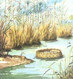 Image result for story of Musa basket in river nile