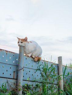 【画像あり】この猫なにしてんの?