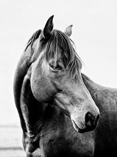 Affordable Art | Photography by Calico Pony #horses #artprints