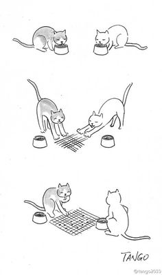 Shanghai Tango is an artist from China. In an ongoing series, Tango's simple and clever drawings 'say it all' without saying a word. Witty Comics, Cat Comics, Funny Comics, Funny Cartoons, Funny Memes, Tango, Shanghai, Clever Animals, Funny Drawings