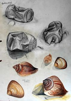 This International GCSE Art sketchbook example includes drawings of crumpled cans found at a local beach as well as watercolour paintings of shells.