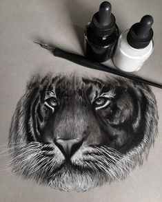 drawings animal pencil realistic animals designstack step tattoo drawing
