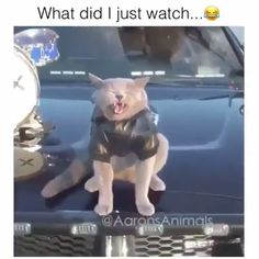 funny Memes videos The post funny Memes videos appeared first on Welcome! Funny Animal Memes, Cute Funny Animals, Funny Animal Pictures, Funny Cute, Funny Photos, Animal Humor, Hilarious Pictures, Animal Quotes, Funny Images