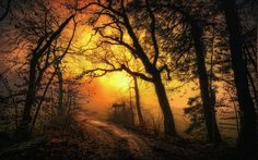 nature, Landscape, Sunrise, Mist, Dirt Road, Forest, Leaves, Trees ...