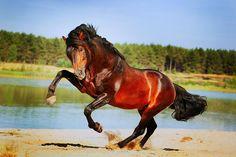 Spirited Nenah Demunster, Netherlands @Nenah DM Photography