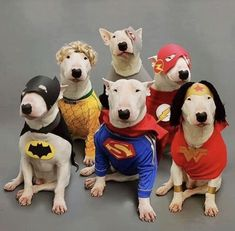 The Justice League Of America ..  The Heroes We Need Today ..  Bull Terriers Keeping America Safe