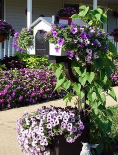 Maybe less around the actual mailbox. This year we planted Surfinia petunias in the mailbox planter and they… :: Hometalk Mailbox Planter, Mailbox Garden, Mailbox Landscaping, Garden Boxes, Lawn And Garden, Garden Art, Home And Garden, Garden Ideas, Garden Projects
