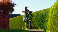 Die Hecke, der grüne Sicht- und Lärmschutz in Ihrem Garten.   #Garten #Heckenschnitt, #Heckenpflege