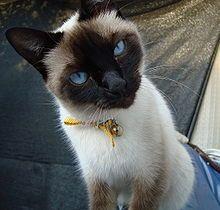 Mi Misha Lo Maximo Cute Cats Beautiful Cats Cats