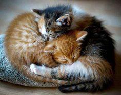 Hermie and Gracie used to sleep like this.