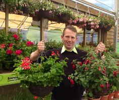 Beautiful Fuchsia and Geranium hanging baskets