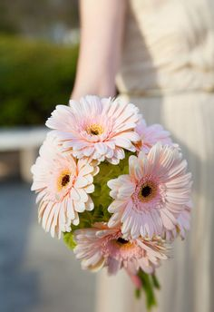 Pink daisies | Sarah Rossi Photography I want to have gerbera daisys but dyed blue. and white.