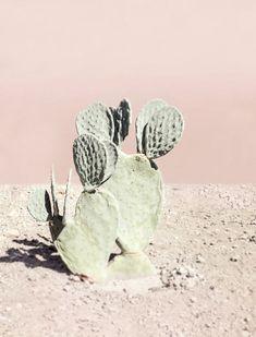 Wilder Cacti & Pink Walls #adelineloves #botanical #adelineinspiration