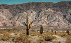 Los solitarios del desierto