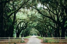 20 Awesome Things to do in Savannah, Georgia. In this Savannah travel guide, you'll find all the best Savannah, Georgia things to do. From southern food to historic houses to haunted mansions Savannah Hotels, Visit Savannah, Savannah Chat, Savannah Georgia, Georgia Usa, Romantic Destinations, Travel Destinations, Romantic Travel, Zion National Park