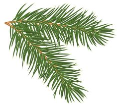 Pine Branch PNG Clip-Art Image