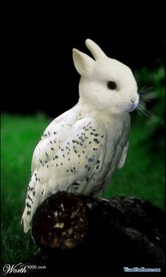 I chose this picture because I thought it was absolutely hilarious. Who would thought of a bunny and owl combination?