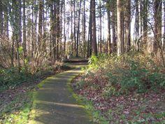 Fir Grove Park in Beaverton, Oregon- our neighborhood gem.