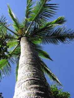 love palm trees!